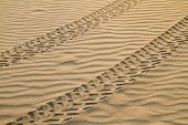 ATV Tracks On Sand