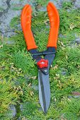 Gardening Tool To Trim Hedge, Cutting Bushes With Garden Shears, Seasonal Trimmed Bushes poster