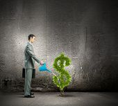Image of businessman watering money tree inshape of dollar symbol