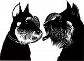 image of schnauzer  - miniature schnauzer dog animal drawing withers serious - JPG