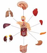 stock photo of endocrine  - Human anatomy abstract design - JPG