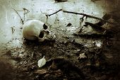 stock photo of skeleton  - fake skull placed in a swamp for a creepy look - JPG