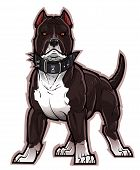 pic of pitbull  - Black and white pitbull dog in a big collar with spikes - JPG