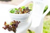pic of spinner  - Salad spinner with iceberg and red lettuce diet concept - JPG