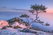 foto of juniper-tree  - Tree on rock in Crimea - JPG