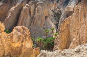 image of tozeur  - Mountain oasis Chebika at border of Sahara Tunisia Africa - JPG