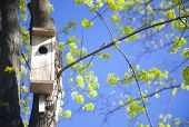 picture of green leaves  - young spring leaves and bird house  - JPG