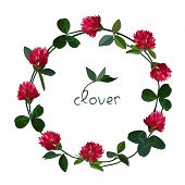 pic of red clover  - Vector floral frame with clover red flowers - JPG