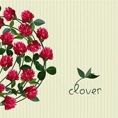picture of red clover  - Vector floral frame with clover red flowers - JPG