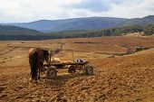 picture of harness  - Rural horse harnessed to a wooden cart - JPG