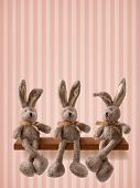 image of hare  - Three hares sitting on the shelf - JPG