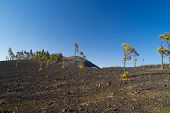 pic of ashes  - Inland Gran Canaria Montanon Negro Black Mountain of volanic ashes small Canarian Pine Trees - JPG