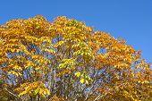 pic of chestnut horse  - Autumn Horse chestnut leaves under blue sky - JPG