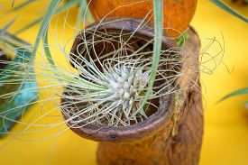 image of tillandsia  - Nice composition of Tillandsia species of evergreen perennial flowering plants in the family Bromeliaceae native to the forests mountains and deserts of Central and South America the southern United States and the West Indies - JPG