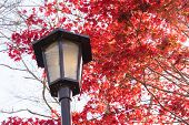 Colorful Autumn Leaf And Lamp In Obara, Japan. poster