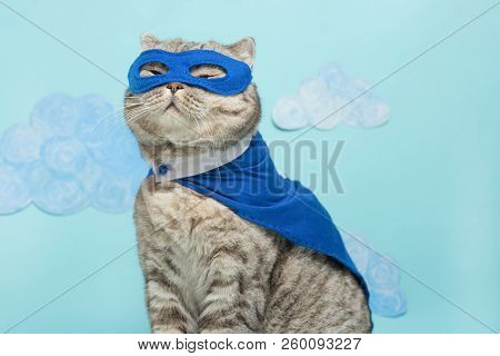 poster of Superhero Cat, Scottish Whiskas With A Blue Cloak And Mask. The Concept Of A Superhero, Super Cat, L