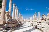Постер, плакат: Улица столбцов в Джераше Римская древний город из Geraza Иордания