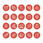 Forest Berries Flat Line Icons - Blueberry, Cranberry, Raspberry, Strawberry, Cherry, Rowan Berry Bl poster