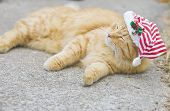 Orange fluffy cat with christmas hat looking like he just woke up poster