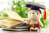 Smiling Teddy Bear Doll With Square Academic Cap And Stack Of Opened Books Against Blurred Natural G poster