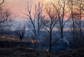 pic of novosibirsk  - Fire in siberian forest near Novosibirsk Russia - JPG