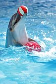stock photo of bottlenose dolphin  - merry dolphin plays with a ball in the pool - JPG