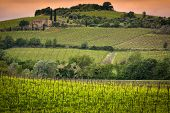 stock photo of husbandry  - Vineyard near Montalcino in Tuscany in Italy - JPG