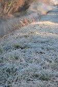 image of steamy  - Details of the frosty grass and steamy stream in the early morning winter light.