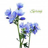 picture of blue-bell  - Blue Watercolor Flowers - JPG