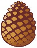 picture of pine cone  - pine cone vector illustration on white background - JPG