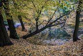 stock photo of polonia  - Autumn in Oliwski Park in Gdansk Poland - JPG