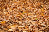 stock photo of floor covering  - image of forest floor covered with leaves - JPG