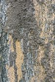 picture of termite  - Termite colony on a bark of a tree closeup - JPG
