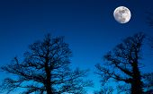 pic of moon silhouette  - Moon rising above distant trees using a long lens to create the compression effect of a larger moon  - JPG