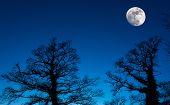 Постер, плакат: Moon Silhouette