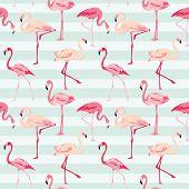 foto of flamingo  - Flamingo Bird Background  - JPG