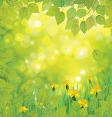 picture of dandelion  - Spring background with yellow dandelions and birch leaves border - JPG