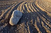 stock photo of cultivation  - big stone on fresly cultivated farm field soil - JPG