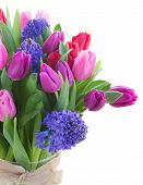stock photo of bosoms  - bunch of  fresh blue hyacinth and  tulips  close up  isolated on white background - JPG