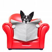 picture of couch potato  - terrier dog reading blank empty newspaper on a red sofa couch or lounger in living room isolated on white background - JPG