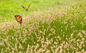 stock photo of grass area  - Spring meadow of green grass and butterflies - JPG
