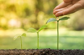 picture of water-saving  - hands nurturing and watering  young baby plants growing in germination sequence  / Love and protect nature concept
