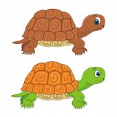 stock photo of testudo  - Turtle tortoise cartoon vector illustration - JPG