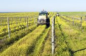 foto of chug  - Farmers with tractors spraying the vineyard with pesticides - JPG