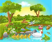 picture of fish pond  - ducks on the pond - JPG