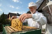 picture of beehive  - Beekeeper checking a beehive to ensure health of the bee colony or collecting honey - JPG