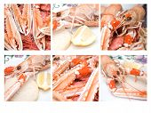 picture of norway lobster  - Nephrops norvegicus or Norway lobster is a decapod found in the northsea area - JPG