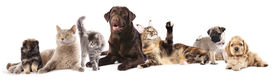 foto of coon dog  -  Group of cats and dogs in front of white background - JPG