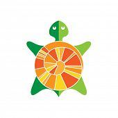 stock photo of turtle shell  - Symbolic image turtle  - JPG
