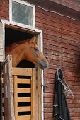 picture of stable horse  - horse in stable watching what